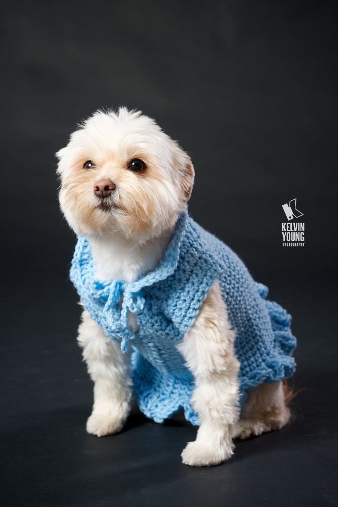 KYP-Pet-Photography-Renee005